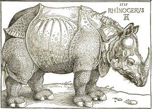 5 Rhinocerus
