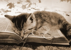 kitty sleeps on book