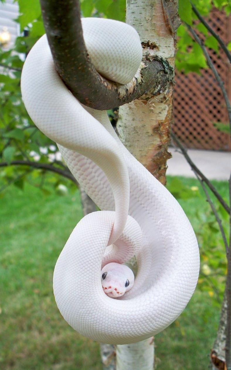reptiles& amphibia on